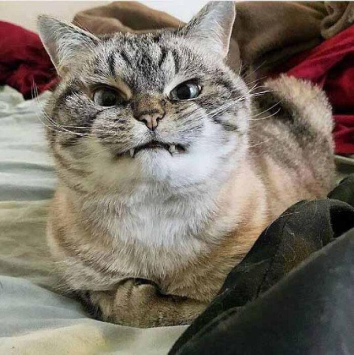 Vampire Kitten!