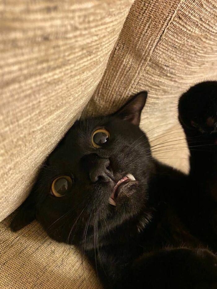 My Batcat