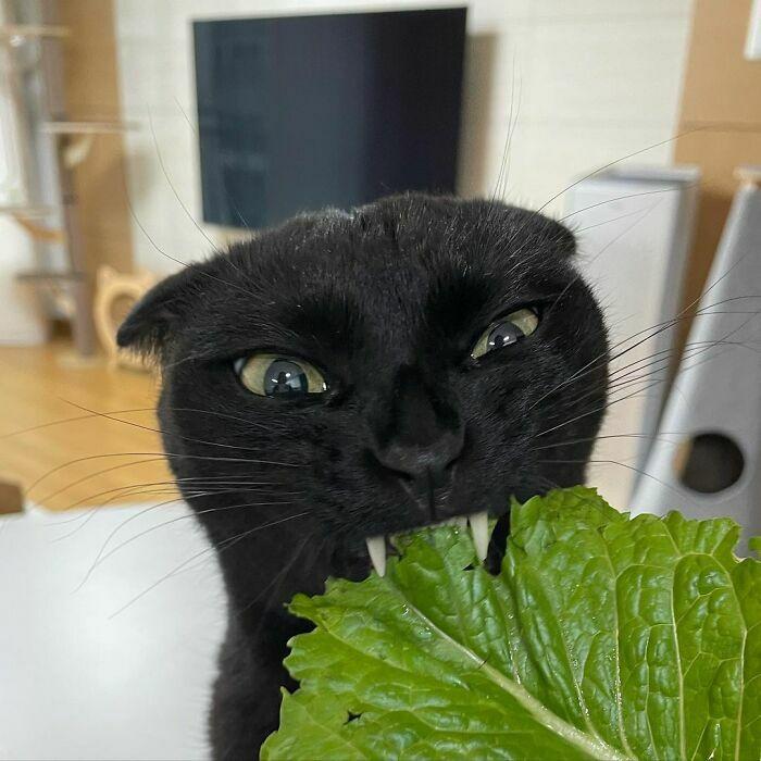 Meonji And Her Teef Leaf