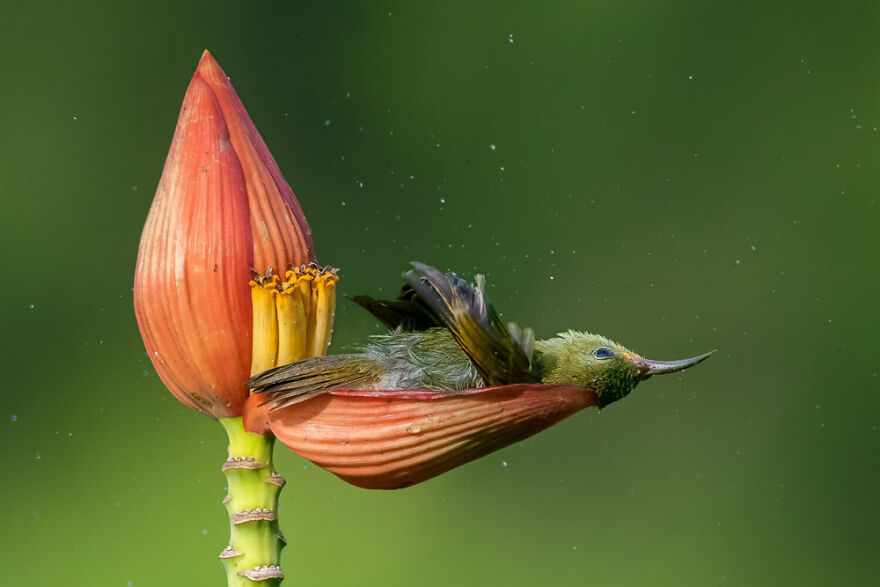 Bird Behaviour: 'Floral Bathtub' By Mousam Ray (Gold)
