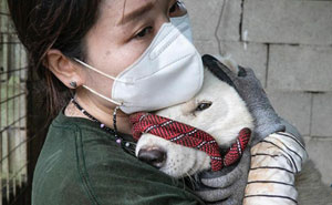 Cruelly Treated Dogs Saved By Humane Society International As They Shut Down The 16th South Korean Dog Meat Farm