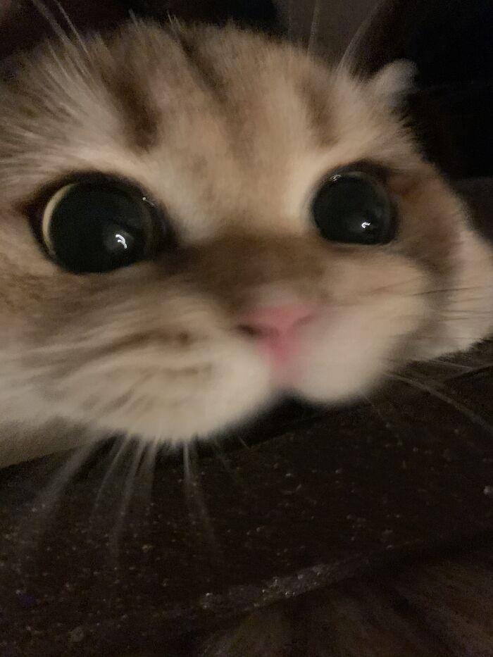 My Cat, Copper