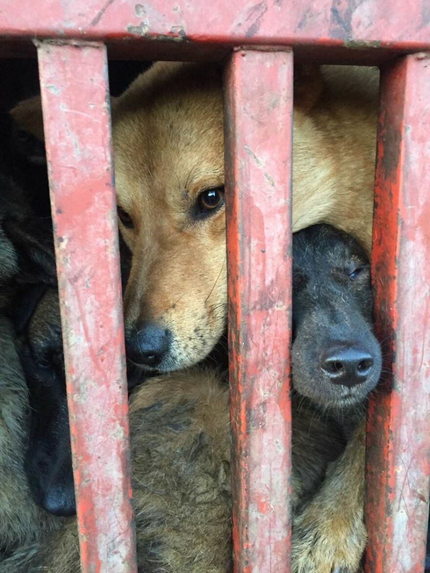 Dogs Experience Care And Love For The First Time After Being Saved From A Meat Farm