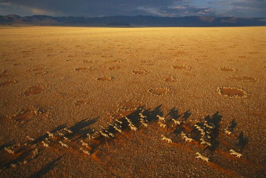 Fairy Circles By George Steinmetz (Highly Commended In Wildlife Category)