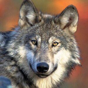 Howlin'Werewolf79