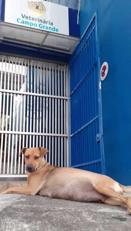 Este papá perro esperó fuera de la clínica veterinaria mientras la madre daba a luz a 6 cachorros