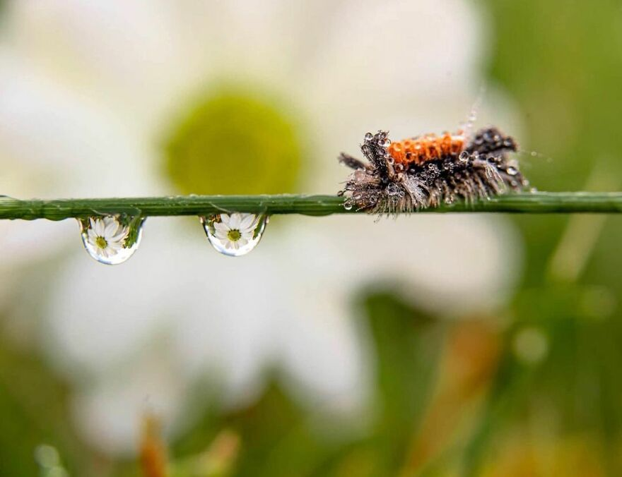 Photographer Makes Amazing Images Using Water Drops