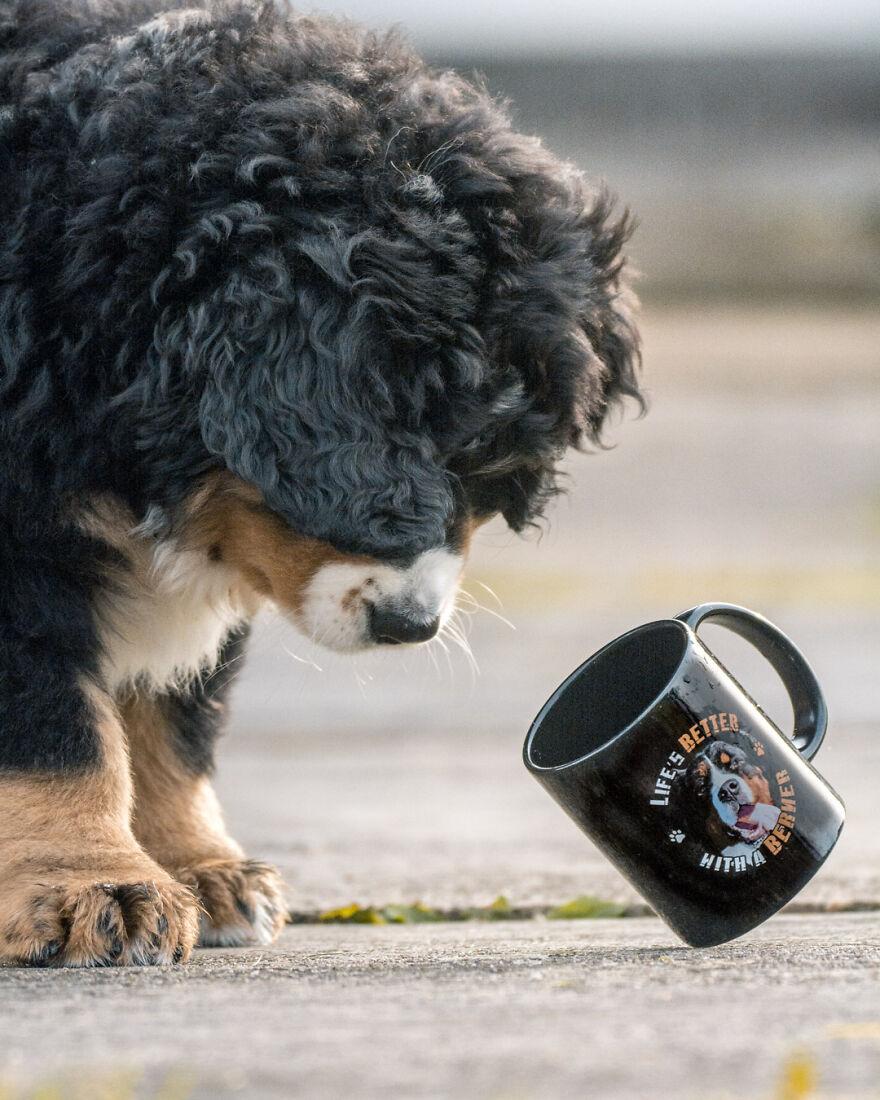 Belgian Photographer Captures 40 Perfectly Timed Animal Photos