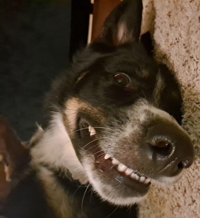 He Looks Like He's Smiling