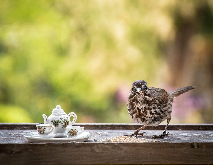 Sipping Tea With My Animal Friends - Part 2