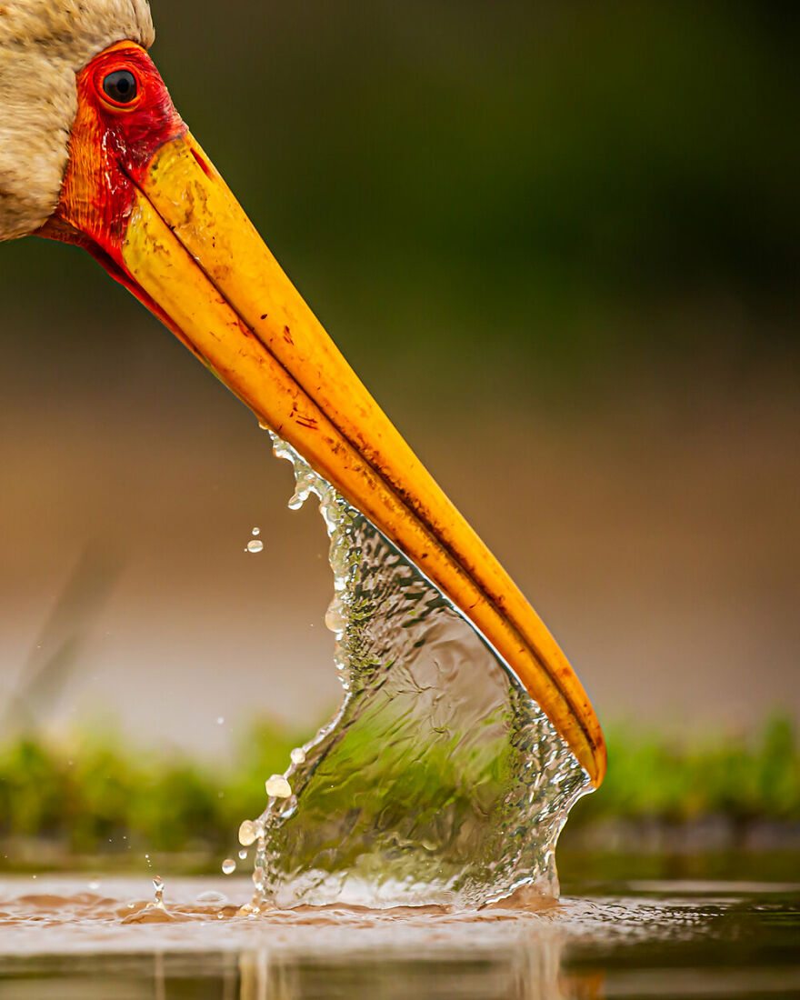 Highly Commended: Mohammad Murad - Water Barrier (Attention To Detail)