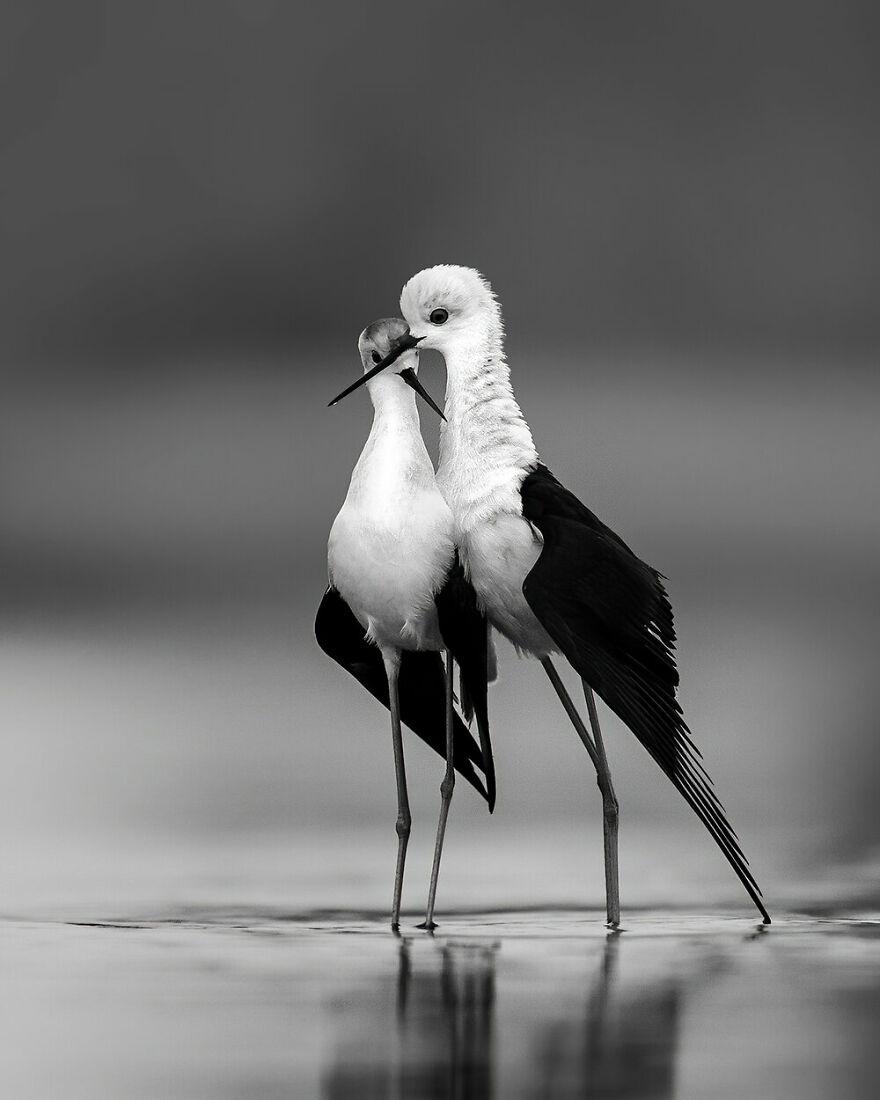 Highly Commended: Akhil Vinayak Balachandra Menon - The Spirit Of Love (Black And White)