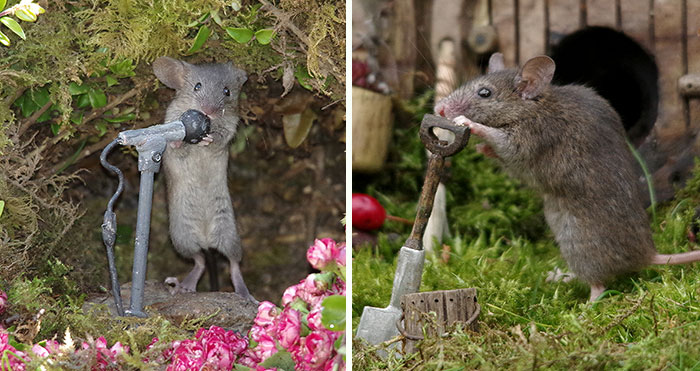 I Built A Little World In My Garden For Mice To Live In, And They're Thriving (30 Pics)
