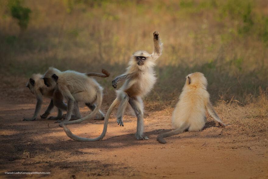 Dancing Away To Glory