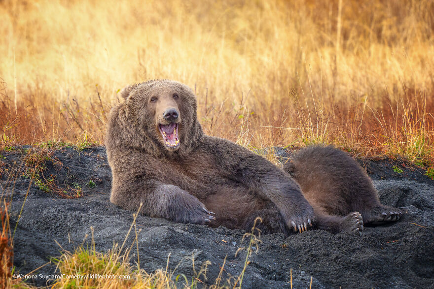 Draw Me Like One Of Your French Bears