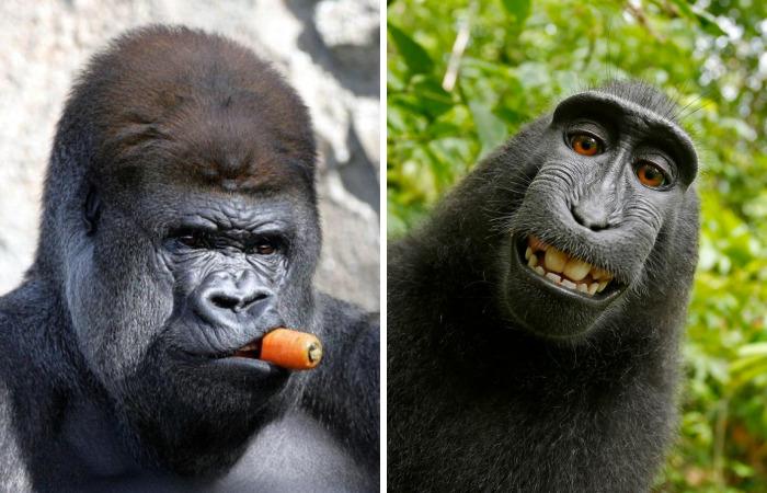 42 Funny Monkeys Behaving, Well, Like Monkeys