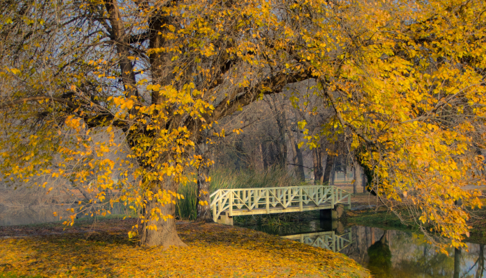 Autumn Begins Today, And Here Are My 12 Photos That Show What Autumn's Like In Macedonia
