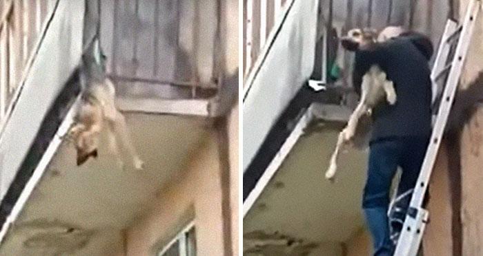 Unos vecinos vieron a este perro atorado en el borde de un balcón, y resultó que intentaba escapar de su dueño abusivo