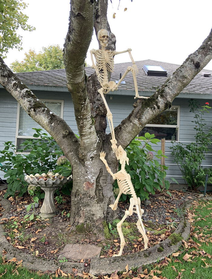My Neighbors Enjoy Halloween