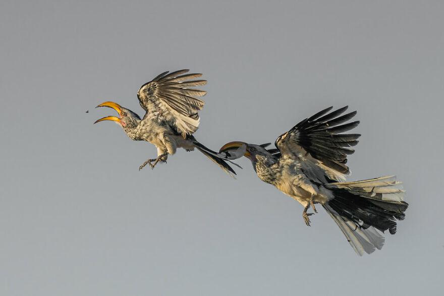 Birds In Flight: 'First Come First Served' By Hannes Lochner (Bronze)