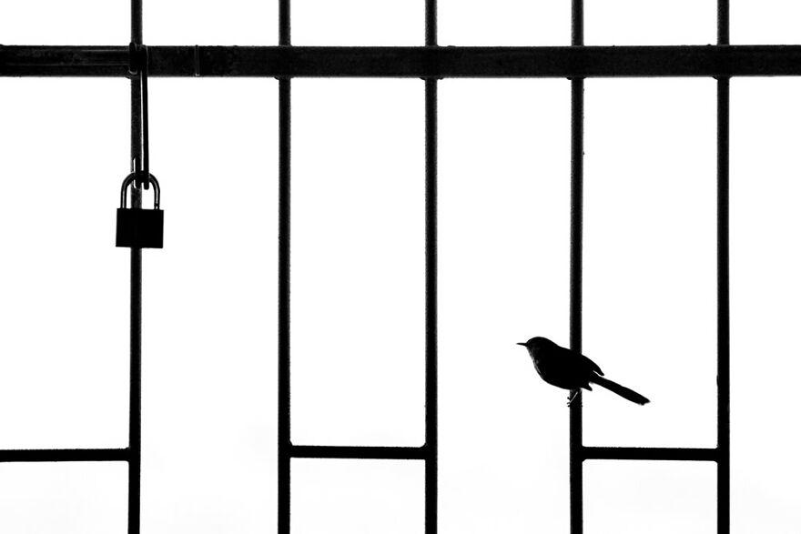 Urban Birds: 'Lockdown' By William Steel (Silver)