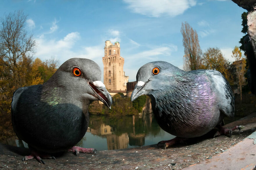 Urban Birds: 'The Guardians' By Paolo Crocetta (Bronze)
