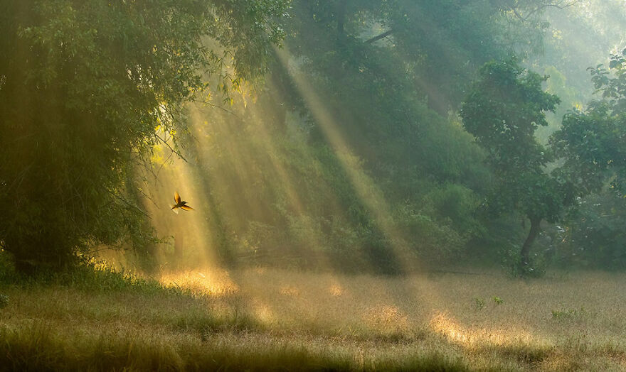Highly Commended: Ben Hall – Backlit Beauty (Birds In The Environment)