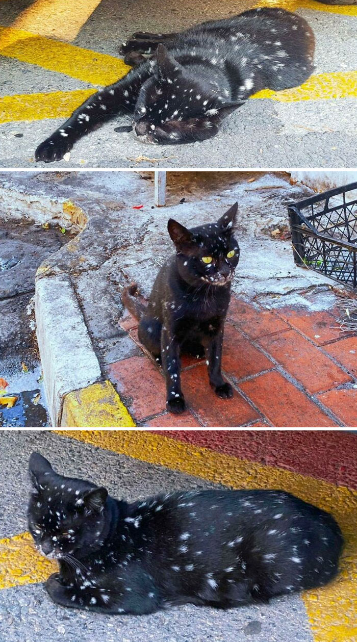 Look At The Markings On This Cat