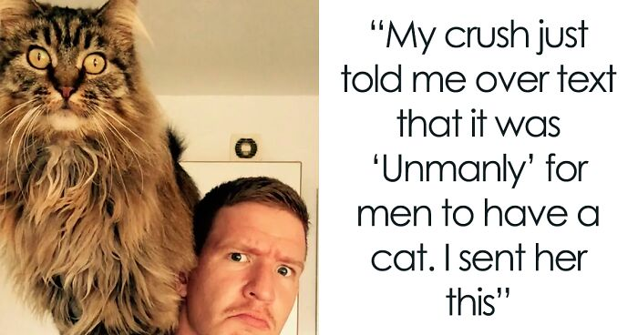 50 Of The Funniest Cat Pictures On The Internet (New Pics)