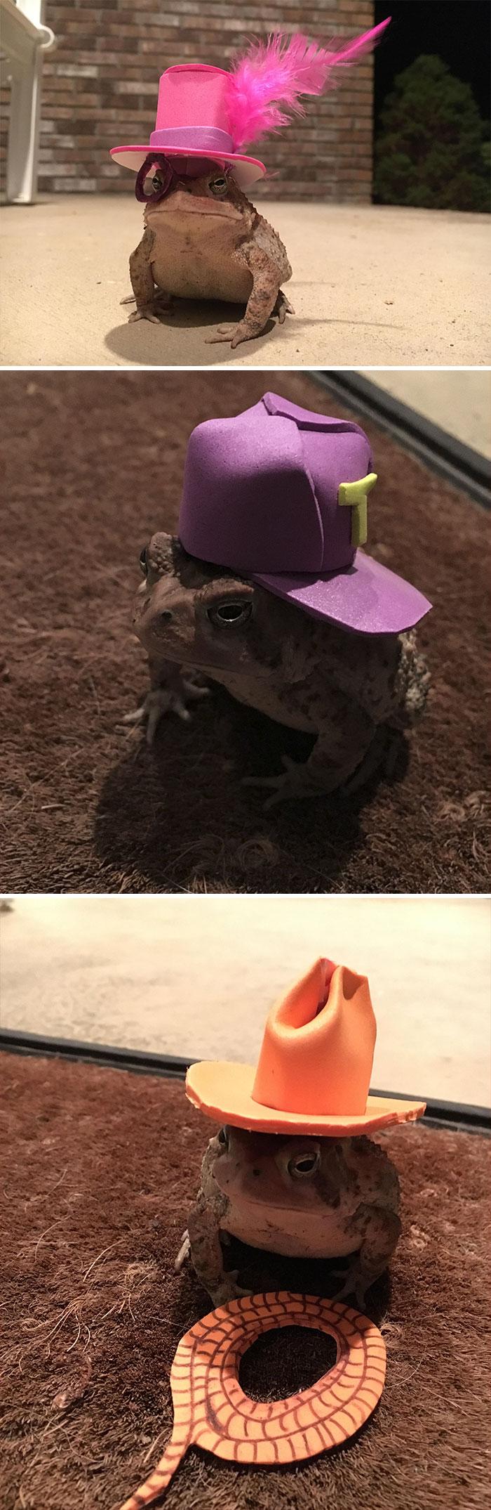 El sapo que pasa el rato en mi porche necesitaba un sombrero