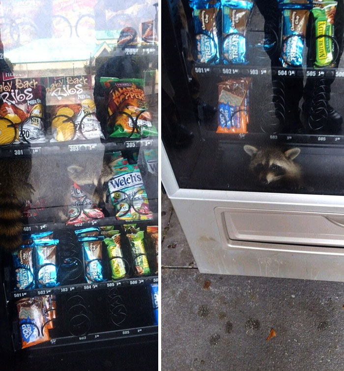 This Gentleman Was Apprehended Today While Committing A Burglary Of A Vending Machine At Pine Ridge High School
