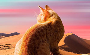This Artist Creates Surreal Photo Edits With Giant Cats In Them, Here Are His Best 91 Edits (New Pics)