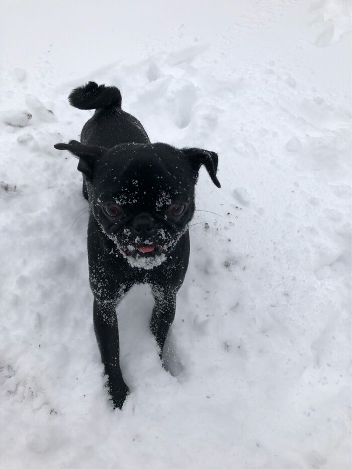 Little Pearls First Snow Day. She Loves It!