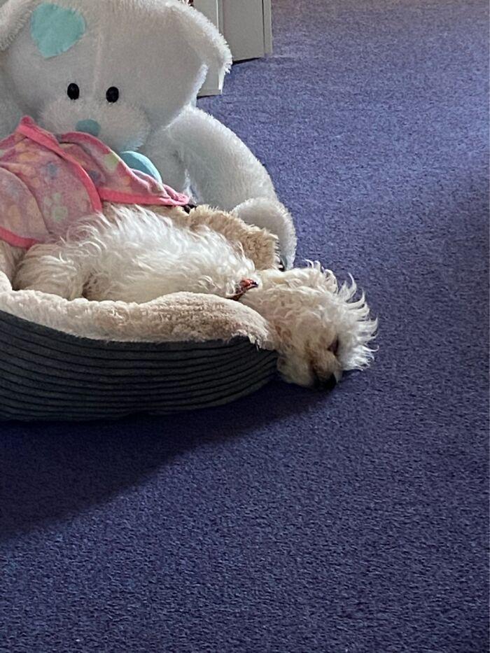 Leave Me Alone. I'm Comfortable! 😝
