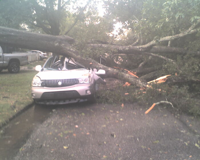 Opened The Door During A Storm To Look. A Lady Was Just Exiting This Vehicle When The Tree Came Down. She Was Ok -- The Truck Wasn't...