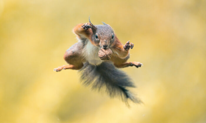 I've Spent 5 Years Capturing Perfectly Timed Action Shots Of Animals In Nature (35 Pics)
