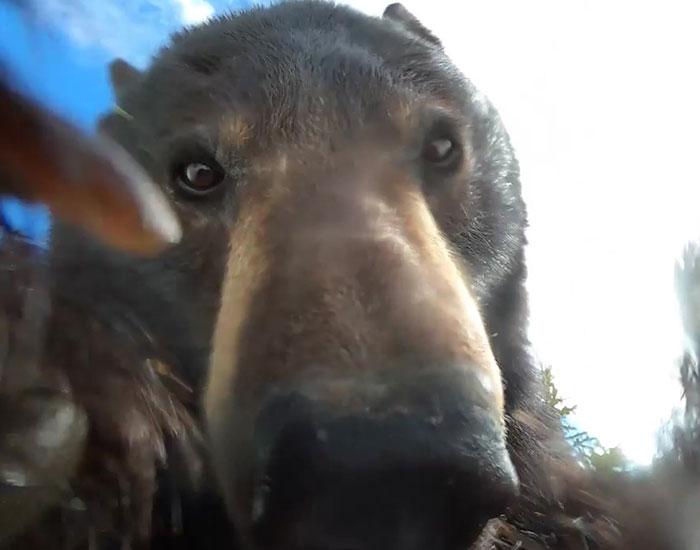 «¡Sin duda la cosa más loca que he encontrado!»: Un cazador encuentra una cámara perdida con imágenes grabadas por un oso