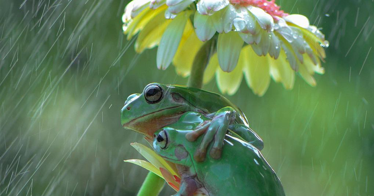 This Wildlife Photographer Takes Photos Of The Frogs Near His House, And The Result Is Adorable (40 Pics)