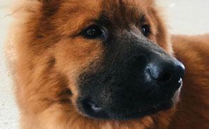 """Una desconocida creyó que este hombre maltrataba a su perro por ponerle bozal, e intentó """"liberarlo"""""""