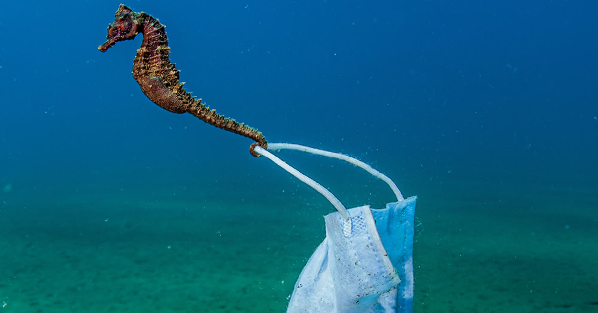89 Amazing Photos From The Finalists Of The Ocean Photography Awards 2021