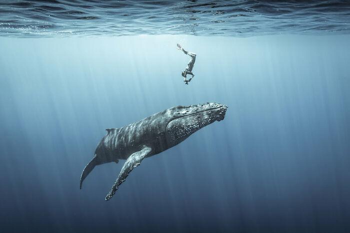 Fotógrafo de Aventuras Oceánicas: Sebastien Pontoizeau