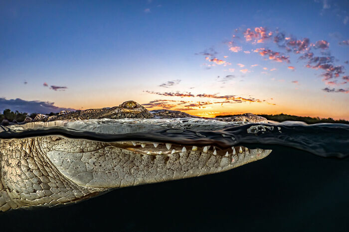 Fotógrafo de Aventuras Oceánicas: Tanya Houppermans