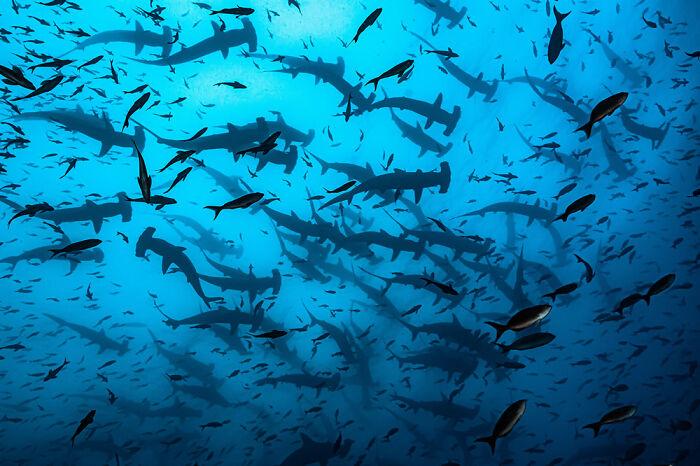 Fotógrafo de Aventuras Oceánicas: Rodrigo Thome