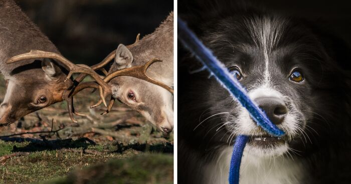 I've Spent 5 Years Capturing Various Images Of Animals, And Here Are My 43 Perfectly Timed Shots