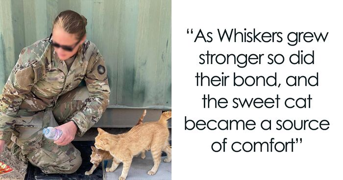 Sergeant Found A Cat With Two Babies On Tour, Named Her Sergeant Whiskers And Wants To Bring Her Home