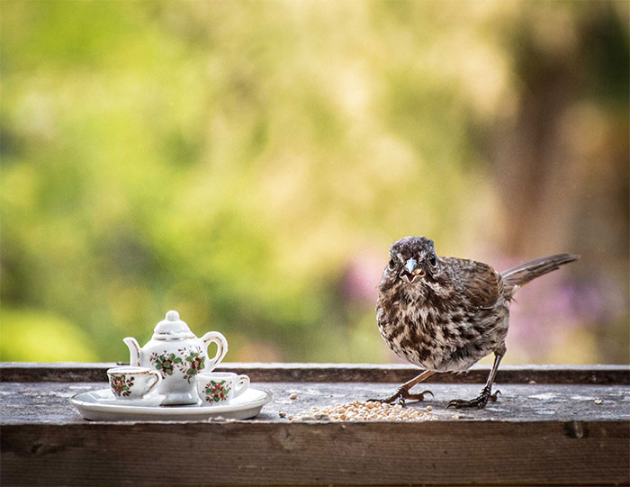 I Have Fun And Magical Tea Parties With All Kinds Of Animals (14 New Pics)
