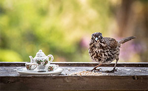 I Spend Most Of My Time In Nature, Having Tea Parties With Animals (14 New Pics)