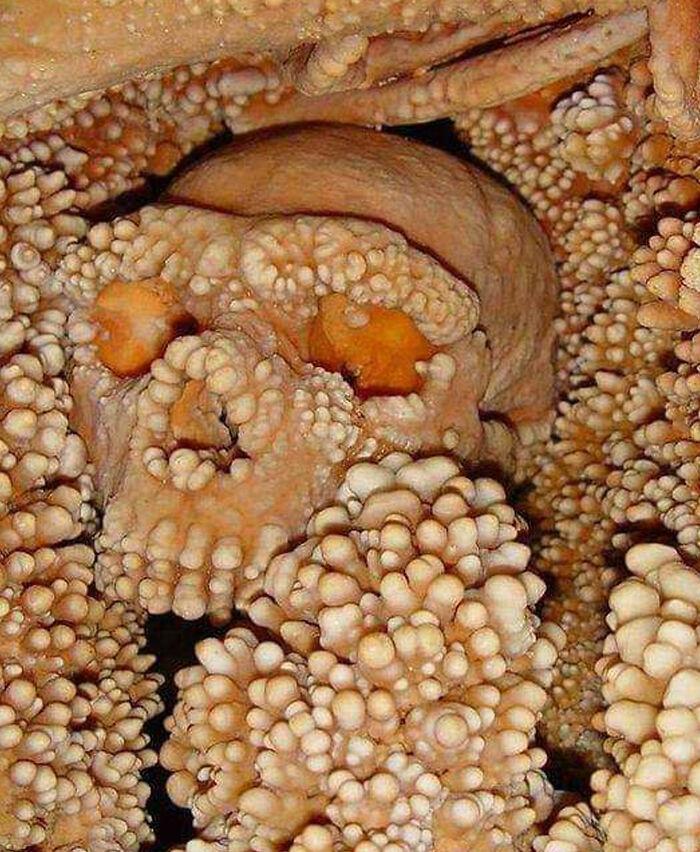 Un cráneo envuelto en piedra caliza