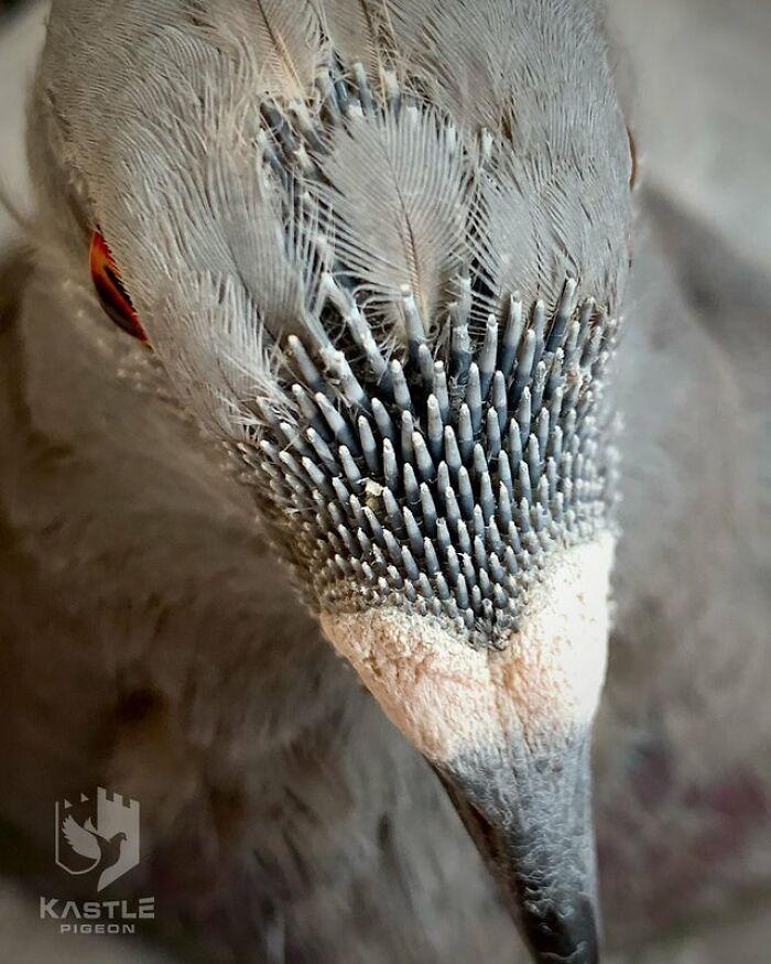 Primer plano extremo de plumas de alfiler en una paloma