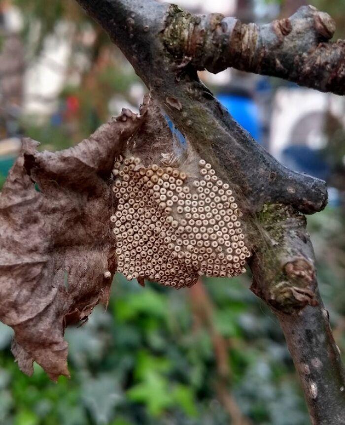 Unos huevecillos que encontré en el jardín